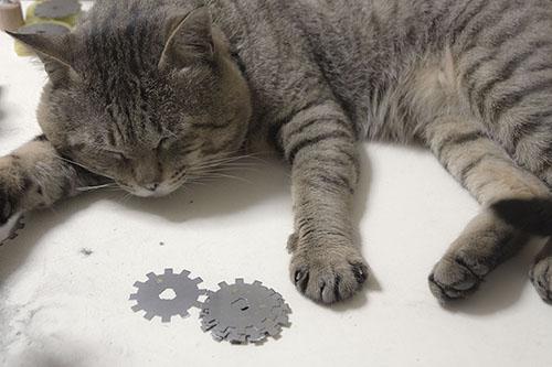 m.orisaki_IMG_8872cc猫の手(コビ)cc-ok.cut72w500.jpg